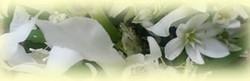 Flower20120520a_2